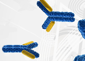 Banner_Antibodies_AssayBiotech_Interchim_0317