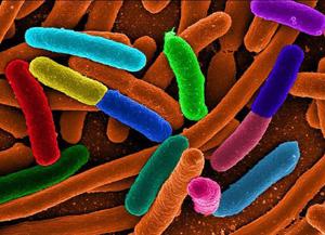 PMAxx_Biotium_Interchim_1016