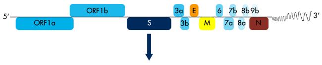 SARS-CoV-2_Genomic_RNA_Interchim_0221
