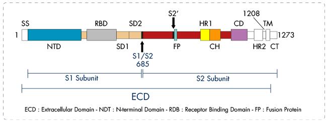 SARS-CoV_S_protein_Interchim_0221
