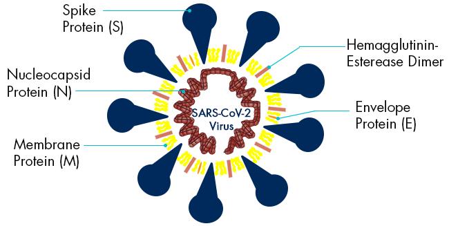 SARS_CoV_2_Virus_Interchim_0121