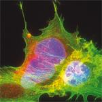 Secondary_Antibodies2_FluoProbes_Interchim_0820